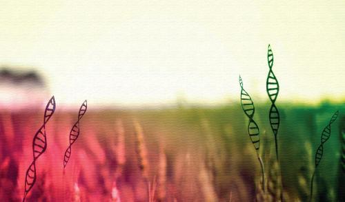 EU signals the resurgence of GM crops