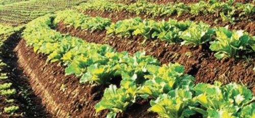 The science of sustainable food in South Africa