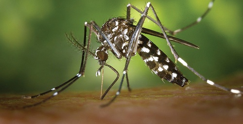 Controlling the mosquito problem