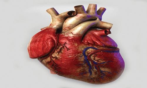 Organ donation: life goes on