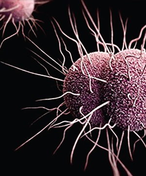 Gone-orrhoea? A new vaccine for gonorrhoea